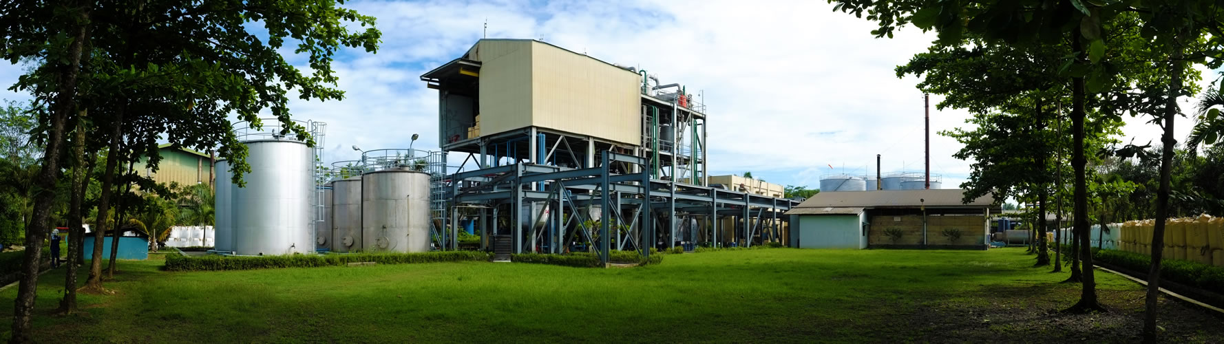 SDP_plant